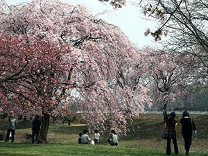日本花の会