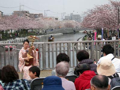 写真:新川千本桜
